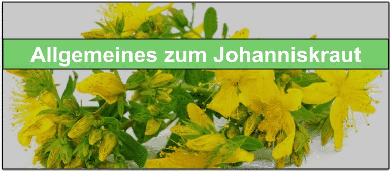 Johanniskraut 900