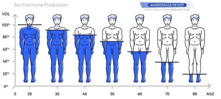 Welcher Testosteron Wert ist normal