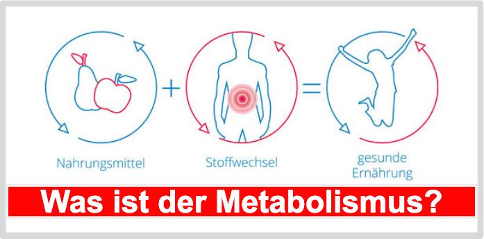 Was ist der Metabolismus